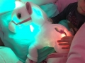 licorne lumineuse