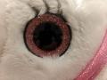 Les yeux de la peluche sont pailletés.